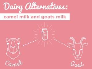 Dairy Alternatives: Camel Milk & Goat Milk