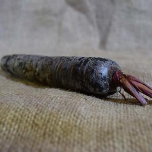 Carrots Purple (100g)
